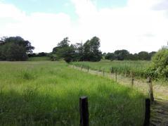 Wiesen entlang der Langballigau