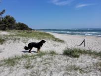 Vor Prora breitet sich ein endlos langer Sandstrand aus