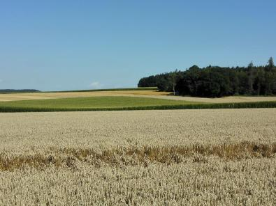Landwirtschaft auf der Hochfläche zwischen Muttenhofen und Breitenbrunn