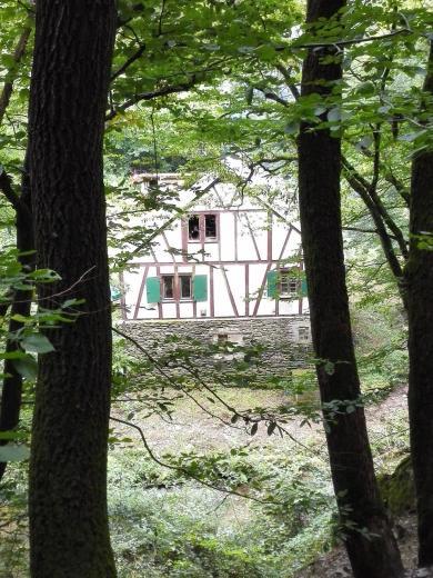 Hexenhaus mitten im Wald