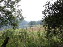 Blick durch die Schilflandschaft auf den See