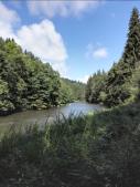 Der Wald reicht an beiden Ufern bis an den Fluss heran