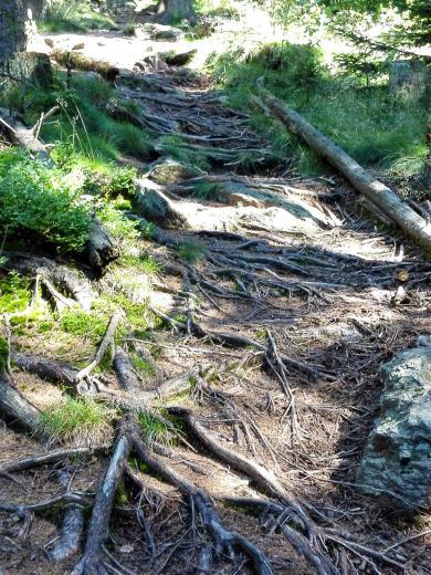 Mal Wurzelwerk, mal große Steine - der Aufstieg zum Osser ist nicht ohne