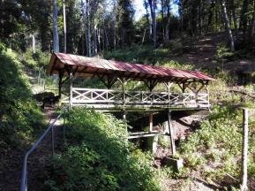Bachquerung im Wald