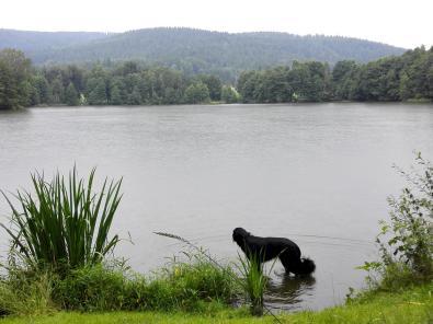 Am Fuße des Steigerwalds kommt viel Wasser zusammen und ergießt sich in Seen und Teiche