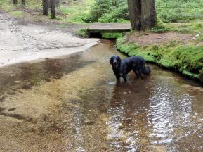 Eine Furth im Wald, Doxi prüft die Wasserqualität