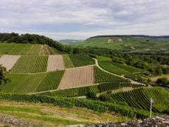 Die Weinhänge von Heilbronn