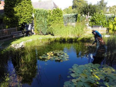 Hübscher Garten in Burg