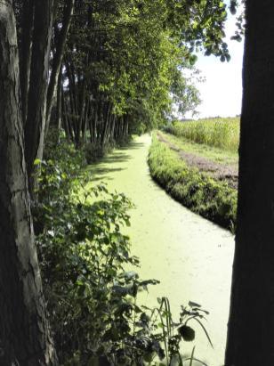 Kein Radweg, sondern ein stehender Kanal, der von Wasserlinsen zugewuchert wurde