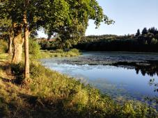 In Clausthal-Zellerfeld gibt es viele Teiche und Wasserflächen