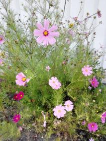 Hübsche Blumen am Womo-Stellplatz