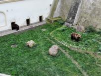 Die Bären wuseln durch das Gelände