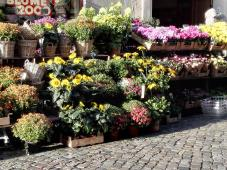 Blumenhandel am Marktplatz