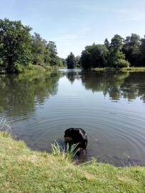 Doxi testet gleich Mal die Wasserqualität im Park