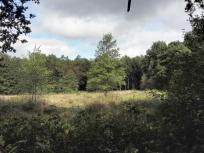 Durch die Kirchheller Heide