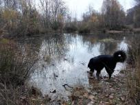 Einige der wenigen Wasserstellen innerhalb der Heide
