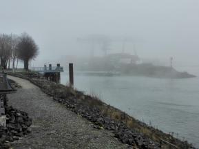 Blick vom Rheinpark hinüber zum Containerhafen