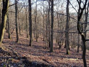 Der Wald ist licht geworden, man sieht viel mehr Rotwild als sonst