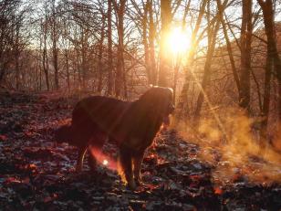 Im Wald kurz vor Sonnenuntergang