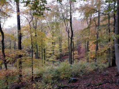 Schöner Buchenwald unterhalb der Teufelskanzel