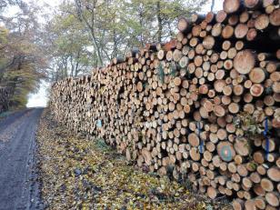 Jetzt ist die Zeit der Waldarbeiter