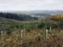 Blick Richtung Siebengebirge