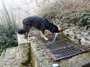 Doxi liebt fließendes Wasser