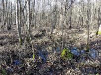 Das Grundwasser steht sehr hoch in dieser Gegend