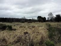 In der Wahner Heide bei Troisdorf