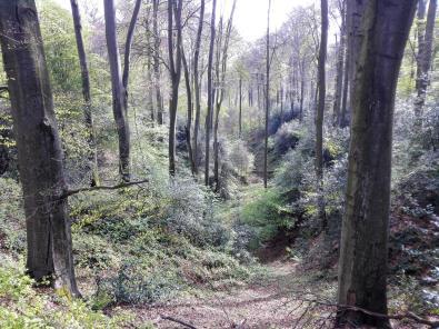 """Blick in einen bewaldeten Talabschnitt der """"Gerresheimer Alpen"""""""
