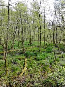 Eines der zahlreichen Feucht- und Sumpfgebiete