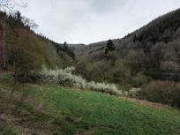 Am Ostersonntag im Höddelbachtal