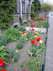 Rot-Gelber Vorgarten