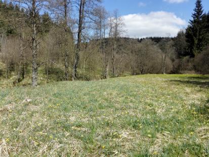 Narzissenwiesen entlang der Olef
