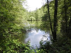 Fischteiche im Wald