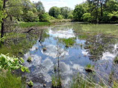 Spiegelungen an einem Teich an der Agger