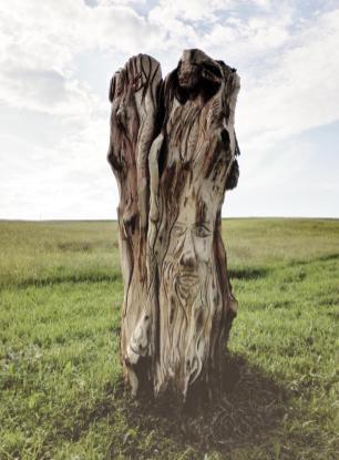 Kunstvoll beschnitzter Baumstumpf am Wildgehege