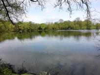 Der Abtskücher Teich