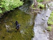 Doxi testet die Wasserqualität des Rinderbachs