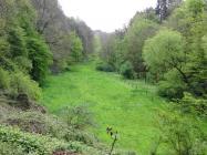 Alles so schön grün hier