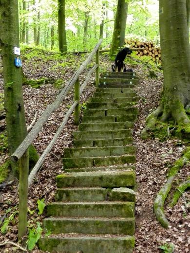 Wir wandern zurück über die nördlichen Höhenzüge am Rand des Jagsttals. Als Doxi eine Treppe entdeckt, sprintet sie schon einmal voraus.