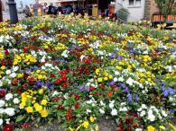Blumenmeer am Rande des Marktplatzes