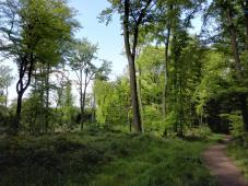 Im Wald bei Hösel