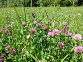 Wildblumen im Kessachtal