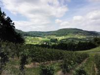 Blick in das Ohrntal beim Verlassen des Mainhardter Waldes
