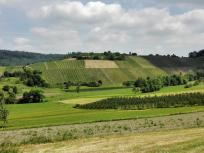 Weinberge bei Untersteinbach