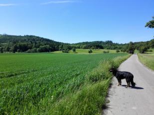 Am Horizont erscheint der Wald am Hallberg