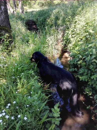 ... Doxi lässt sich frisches Gras schmecken