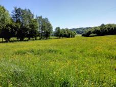 Blick in das Goldbachtal