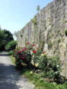 Rosengarten an der Stadtmauer